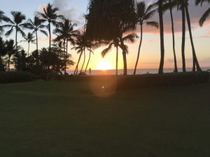 Ocean view sunset with palm trees