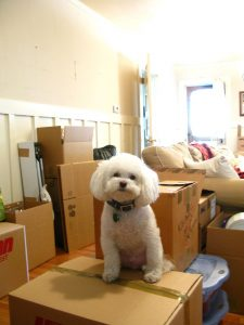 Moving boxes with a poodle on top indicating a move is happening
