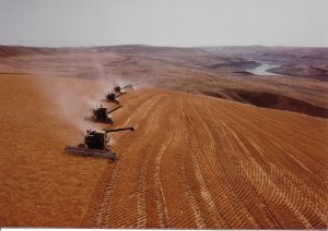 wheat harvest near the Snake River
